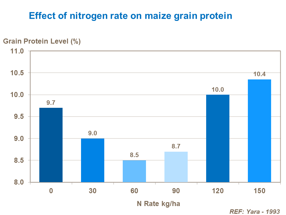 Effect of nitrogen rate on maize grain protein
