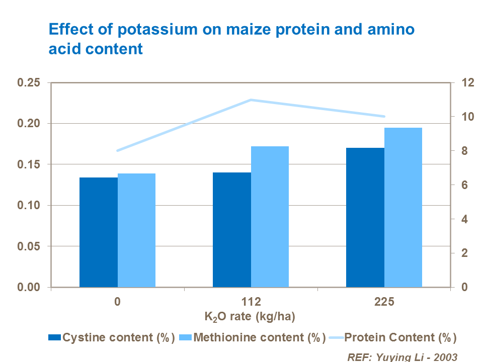 Effect of potassium on maize protein and amino acid content