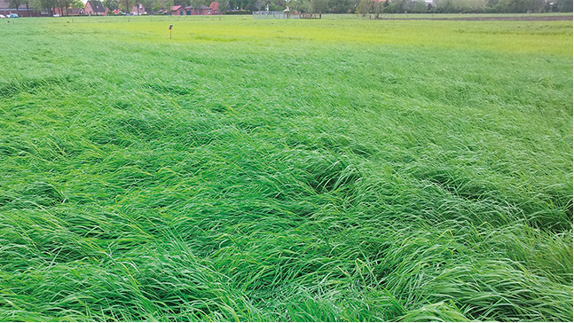 Sulphur deficiency in grassland