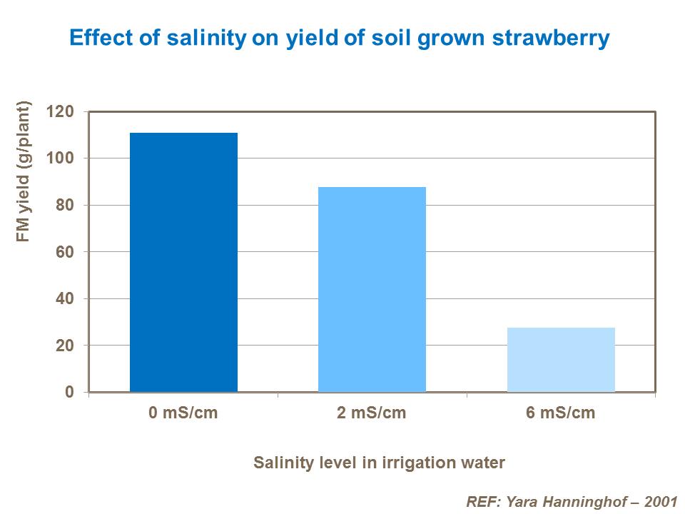 Strawberry soil and water management | Yara UK