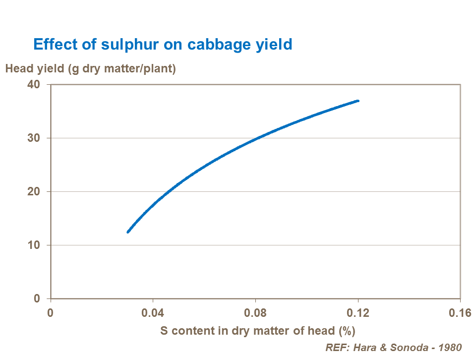 Effect of sulphur on cabbage yield