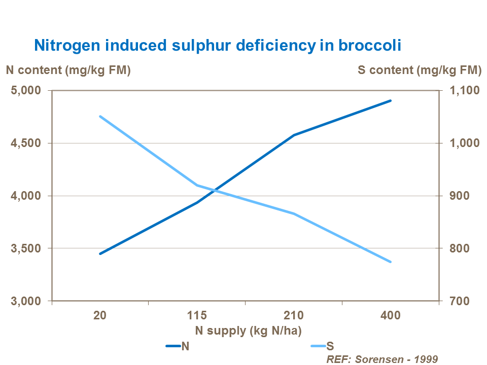 Nitrogen induced sulphur deficiency in broccoli