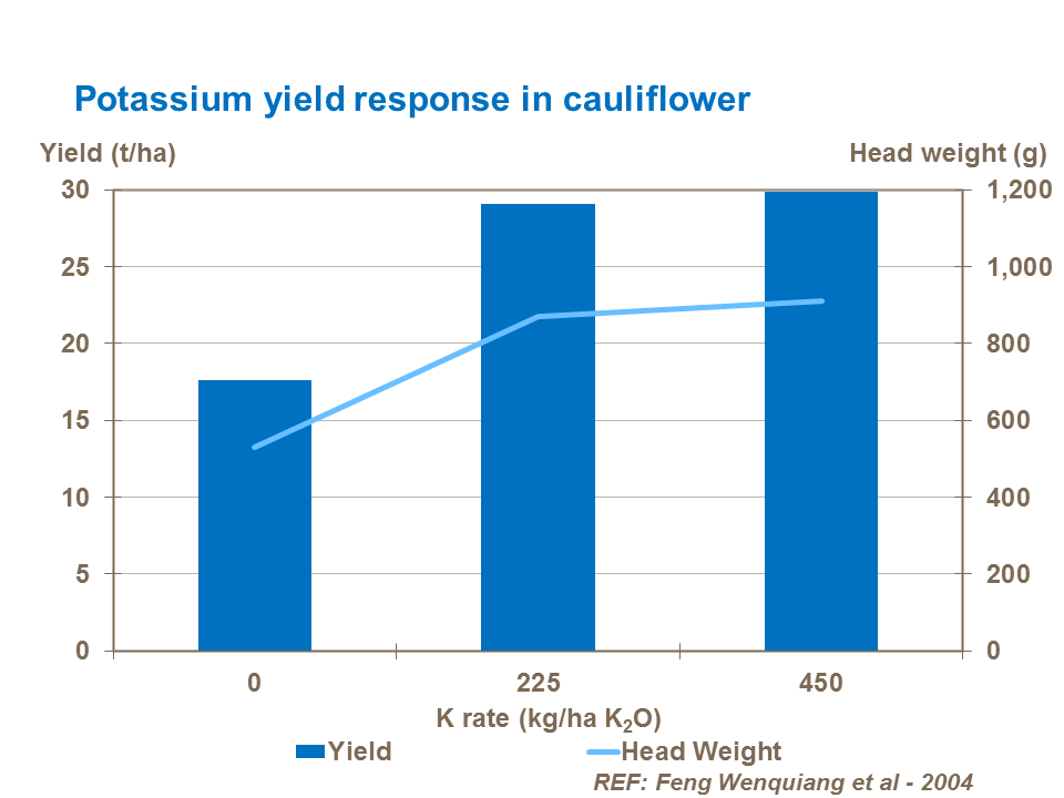 Potassium yield response in cauliflower