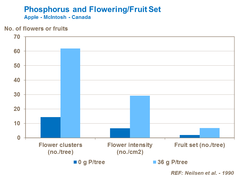 Phosphorus and apple Flowering and fruit set