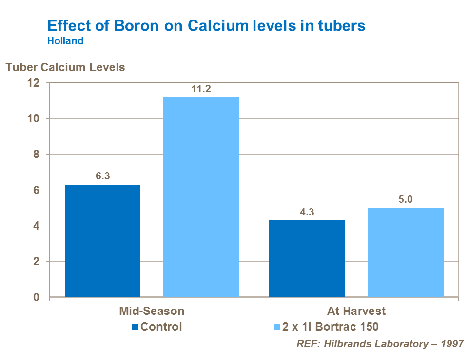 Effect of boron on calcium levels in potato tubers