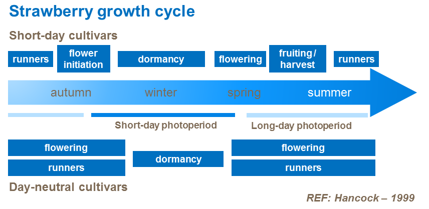 Strawberry growth cycle