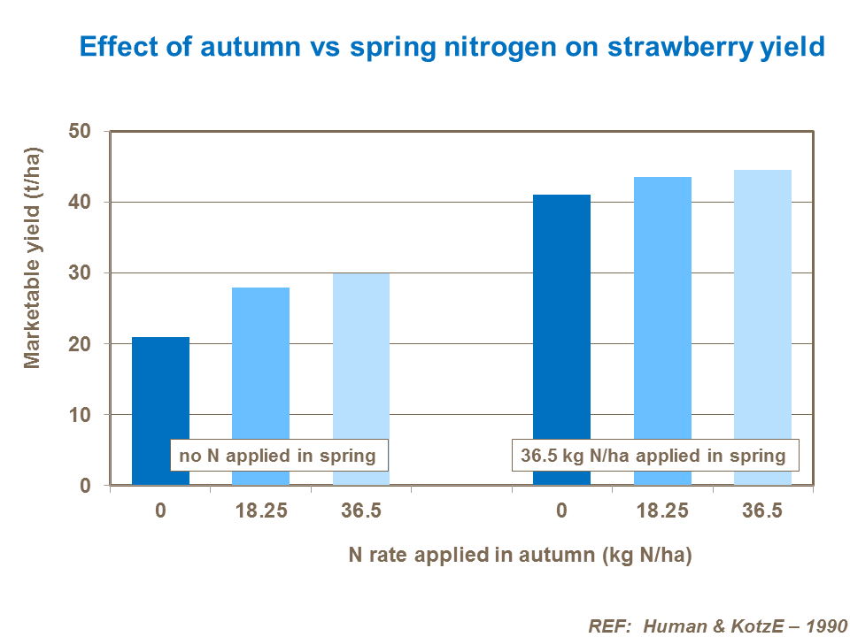 Effect of autumn vs spring nitrogen on strawberry yield