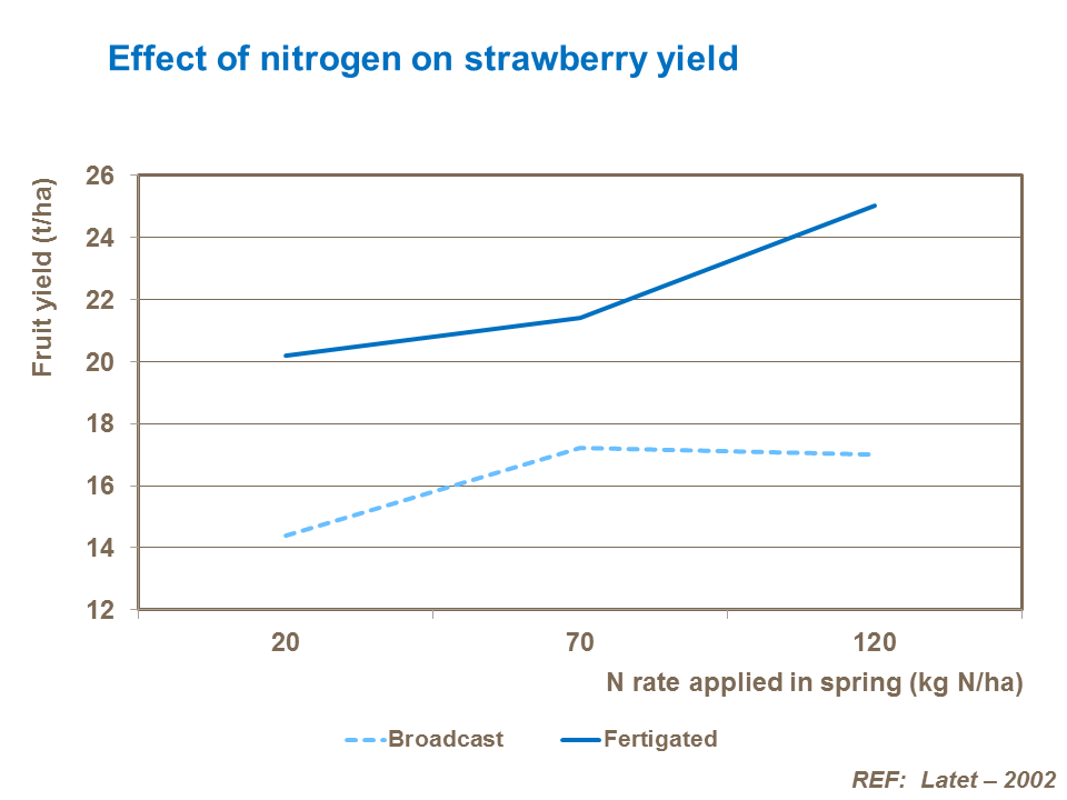 Effect of nitrogen on strawberry yield