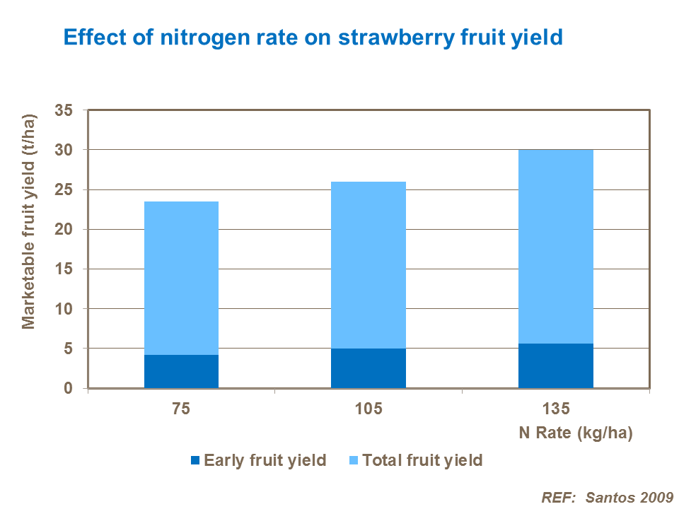 Effect of nitrogen rate on strawberry fruit yield
