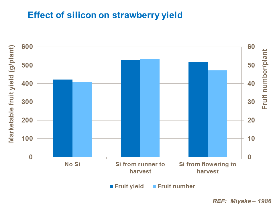 Effect of silicon on strawberry yield