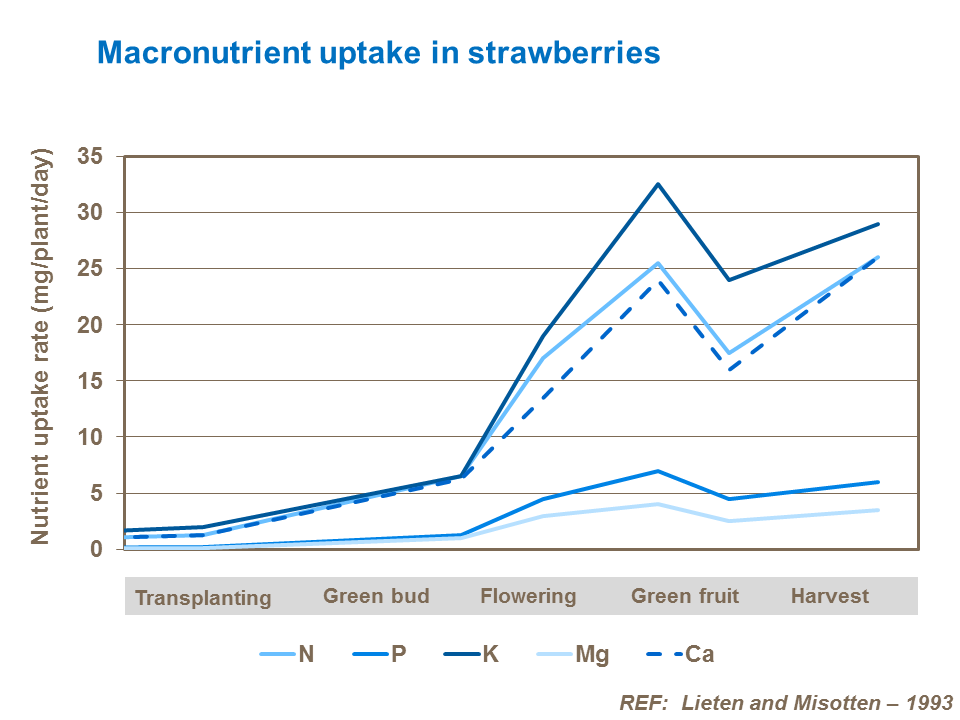 Macronutrient uptake by strawberries