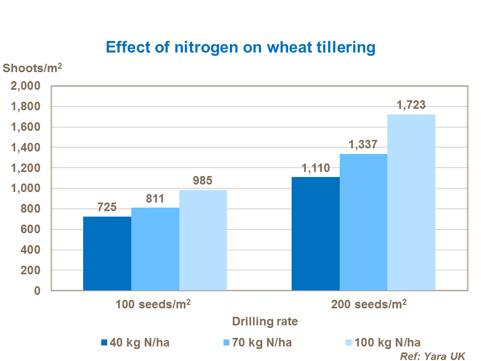 How to increase wheat leaf and tiller numbers | Yara UK