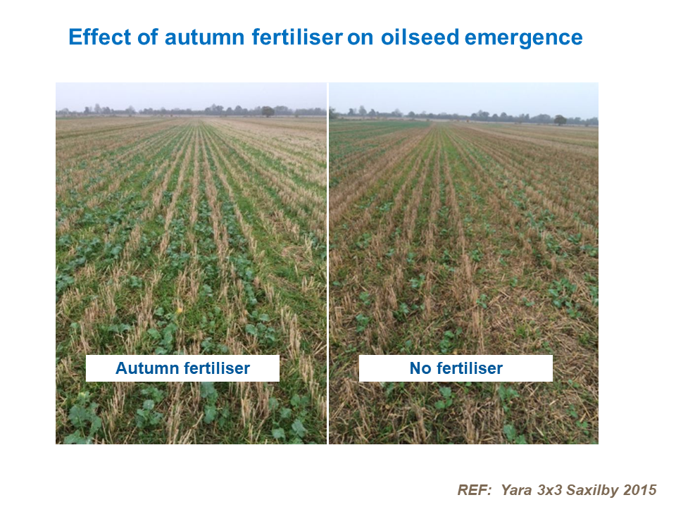 Effect of autumn fertiliser on oilseed emergence