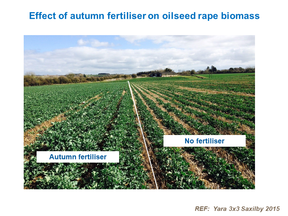 Effect of autumn fertiliser on oilseed rape biomass